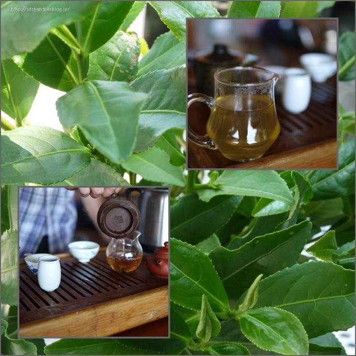 台湾の茶畑へ_a0169924_15371386.jpg