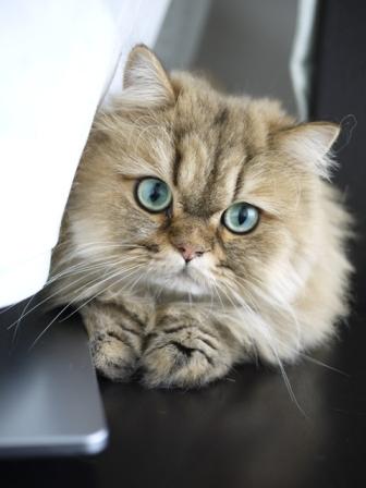 猫のお友だち ハチくん編。_a0143140_2252233.jpg