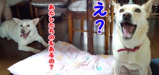 f0195543_16141425.jpg