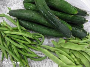 毎日が野菜の日_e0262651_20154151.png
