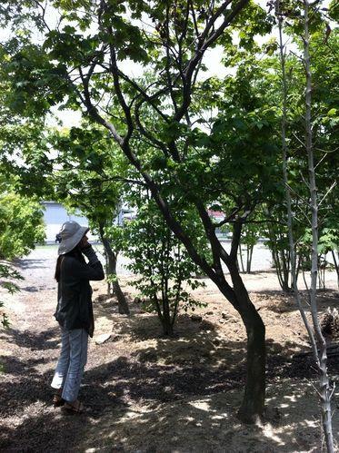 植栽の位置を決めてきました_c0274374_17344157.jpg