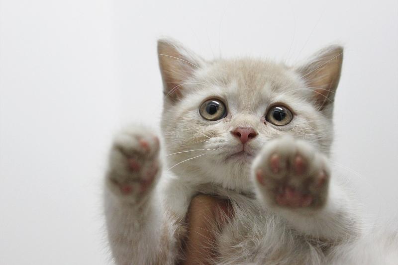 里親募集のネコさん♪ →決定しました!_c0245679_21123524.jpg
