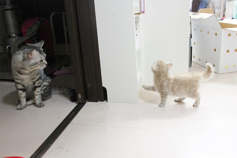 里親募集のネコさん♪ →決定しました!_c0245679_21133146.jpg