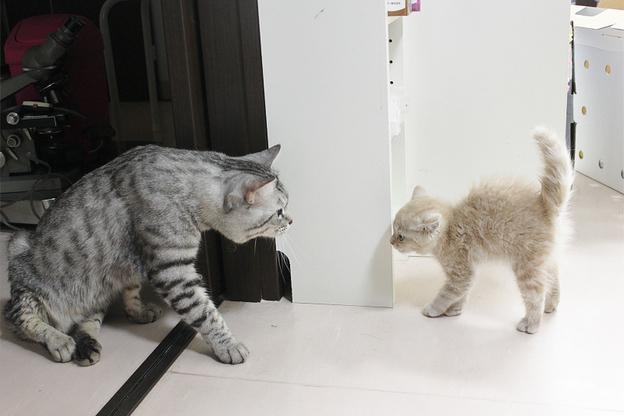 里親募集のネコさん♪ →決定しました!_c0245679_21141088.jpg
