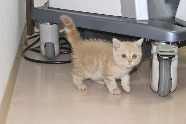 里親募集のネコさん♪ →決定しました!_c0245679_21162721.jpg