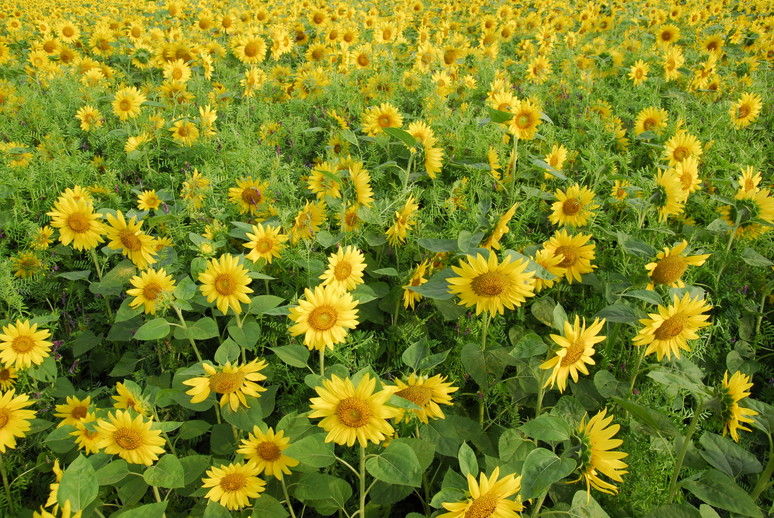 "2013年8月 『北海道大学、夏』  August, 2013  \""Hokkaido University in the summer\""_c0219616_15464043.jpg"