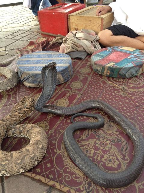 モロッコに行く。⑥ ~コブラ使いに会う~_f0232060_23342353.jpg