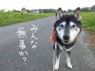 雷様_b0057675_8581043.jpg