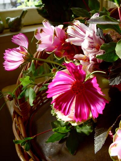 秋桜。。。_a0229658_1834858.jpg