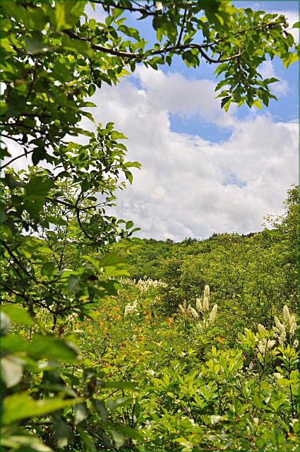 那須高原二日目・・・沼ッ原湿原をハイキング♪~_b0053765_16523772.jpg