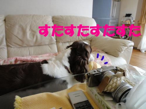 b0204977_2013550.jpg
