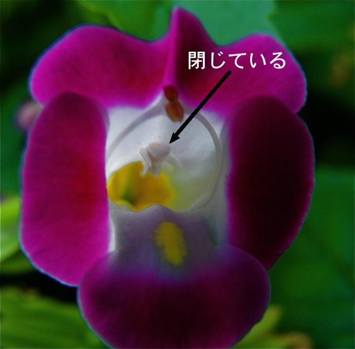 d0006690_1235780.jpg