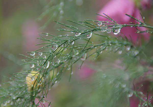 雨上がり_d0162994_841402.jpg