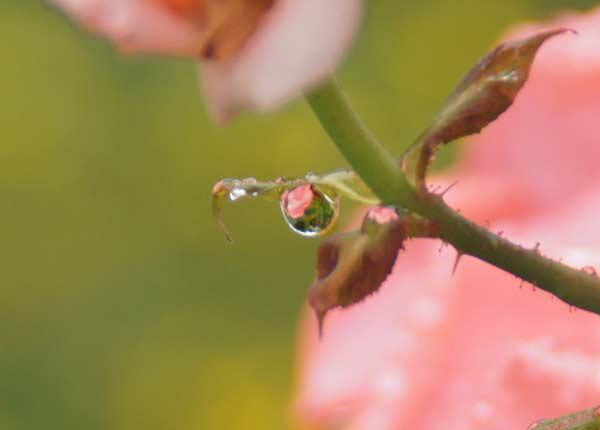 雨上がり_d0162994_913176.jpg