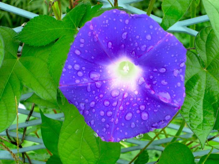 雨の日はお休みしましょう_c0100195_9305530.jpg