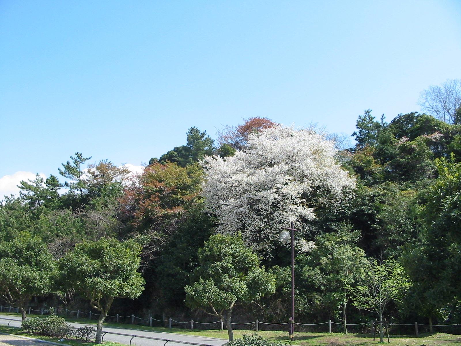 ヤブツバキ植樹周辺の草刈り・・・定例活動日_a0316716_0183119.jpg