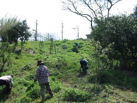 ヤブツバキ植樹周辺の草刈り・・・定例活動日_a0316716_0215389.jpg