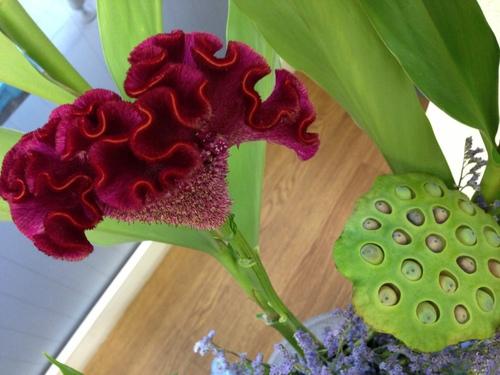 今週のお花とセール情報_a0200423_19553989.jpg
