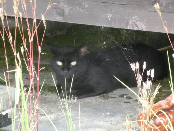 黒い野良ネコ!!_a0199979_17164890.jpg