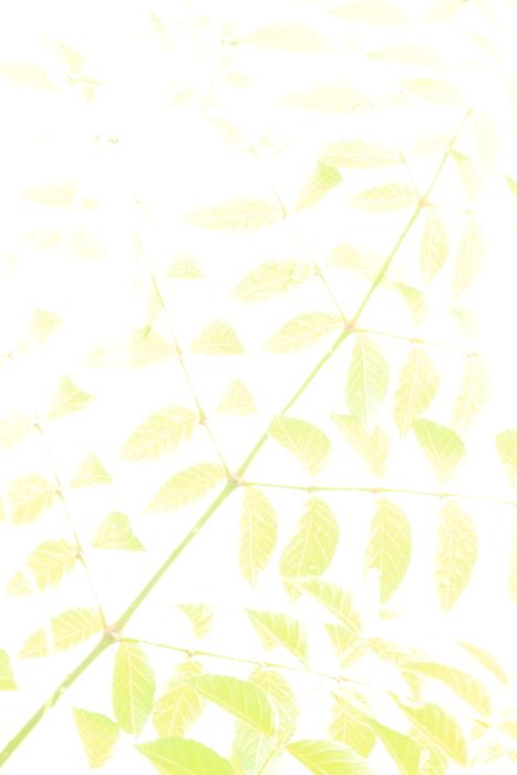 c0195662_2216261.jpg
