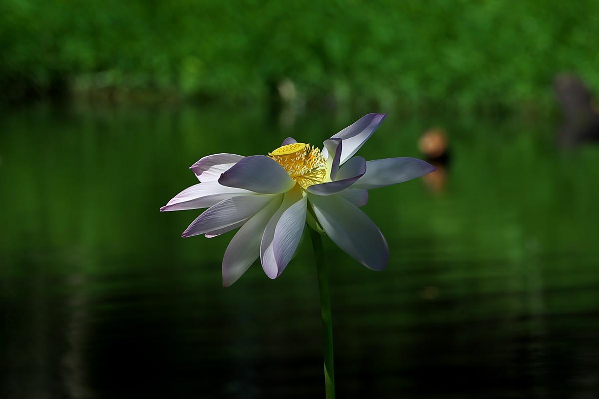 蓮池のカワセミ_d0125872_0183172.jpg