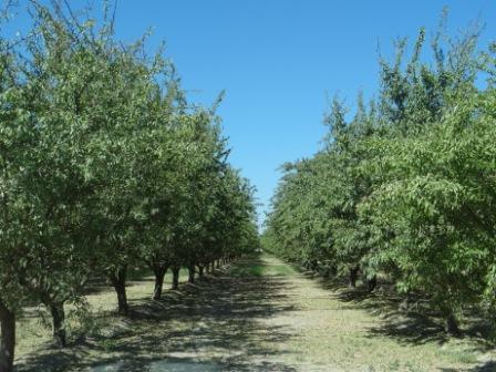 カリフォルニアで有機アーモンドの農園視察ちゅう_c0125114_13464965.jpg