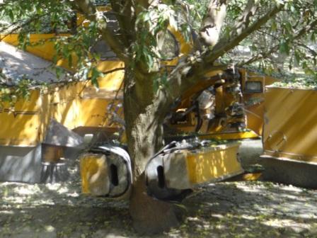 カリフォルニアで有機アーモンドの農園視察ちゅう_c0125114_13504765.jpg