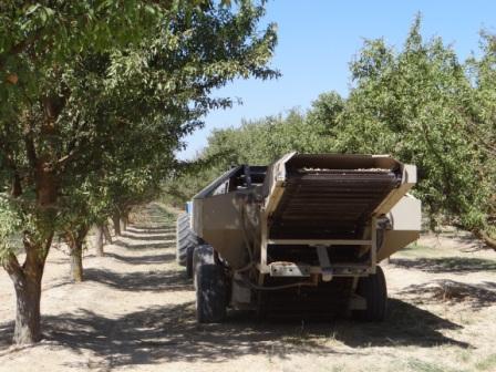 カリフォルニアで有機アーモンドの農園視察ちゅう_c0125114_1357614.jpg