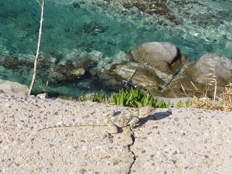 ギリシャ ミコノス島4日目-1_e0237625_23225429.jpg