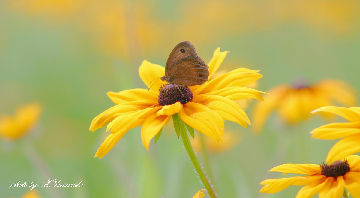 花と昆虫の世界_c0217255_1844537.jpg