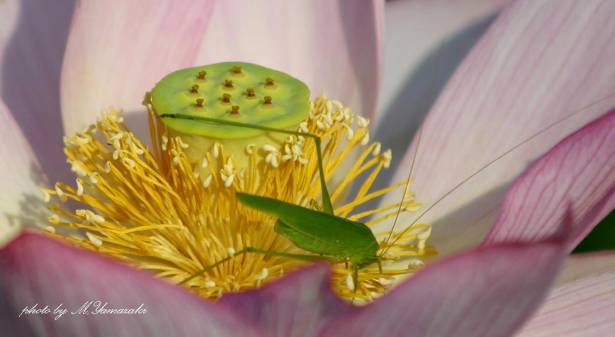 花と昆虫の世界_c0217255_18445750.jpg