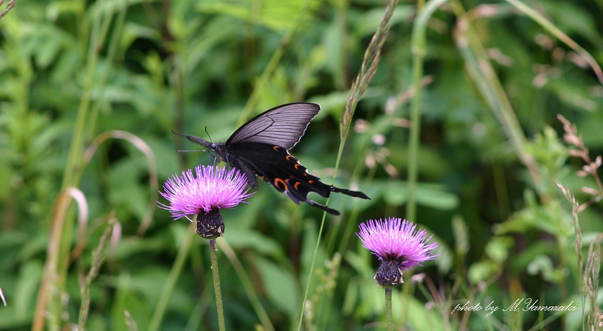 花と昆虫の世界_c0217255_18455524.jpg