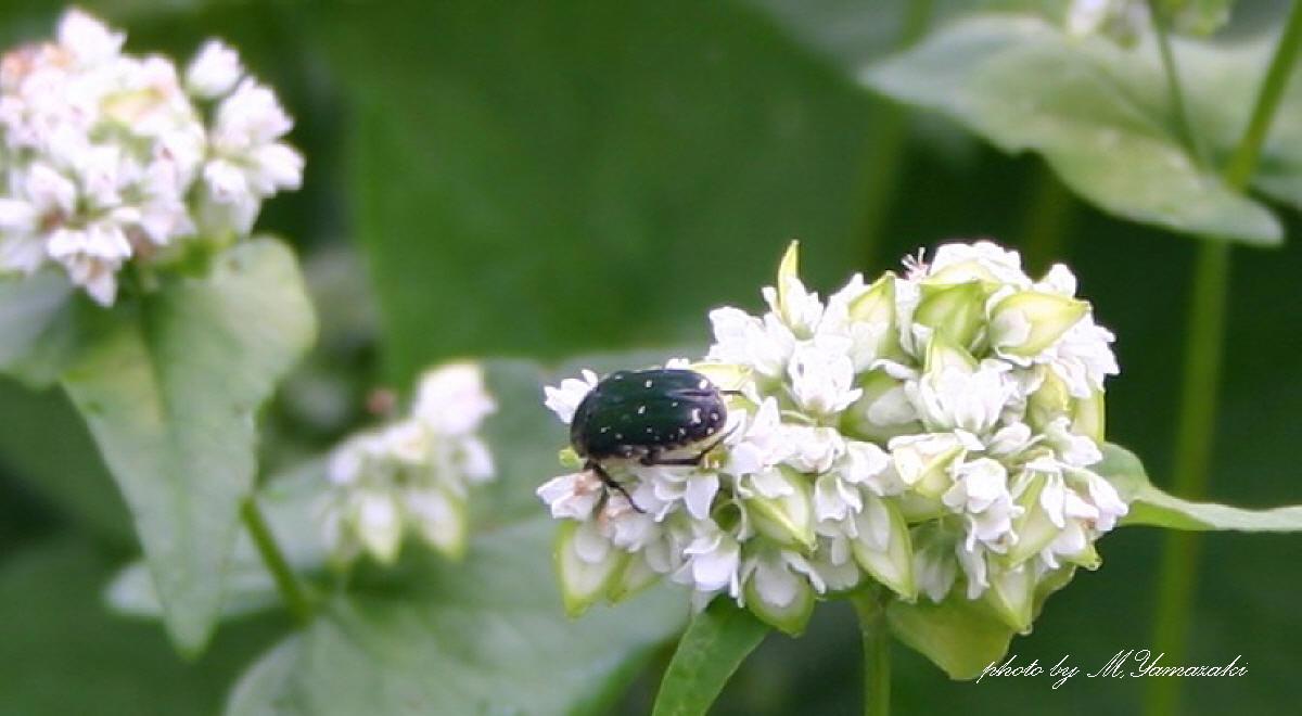 花と昆虫の世界_c0217255_18464889.jpg