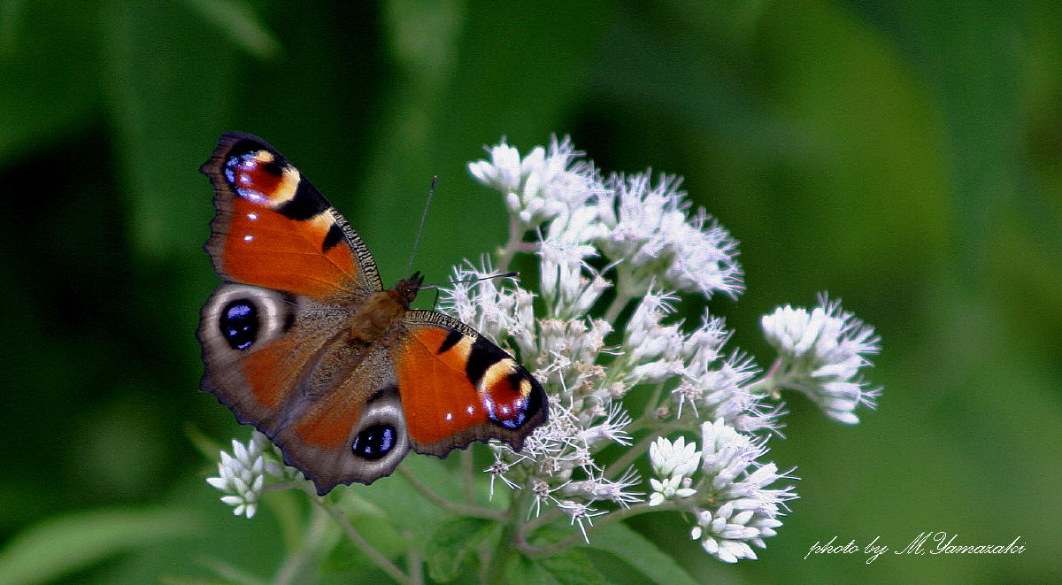 花と昆虫の世界_c0217255_18473410.jpg