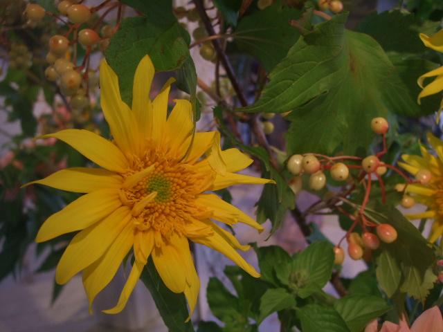 オークリーフ花の教室(赤地さんと宮原さんの作品)_f0049672_1147935.jpg