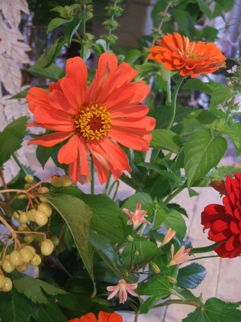 オークリーフ花の教室(赤地さんと宮原さんの作品)_f0049672_11555672.jpg