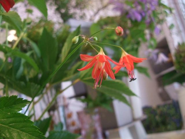 オークリーフ花の教室(赤地さんと宮原さんの作品)_f0049672_11563397.jpg