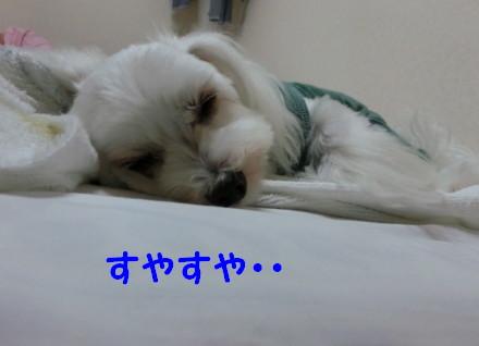 b0193480_10513059.jpg