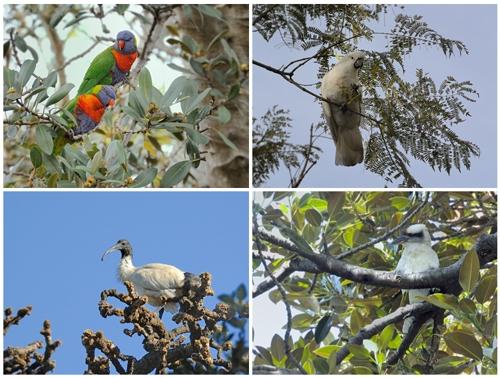 シドニーの野鳥たち_a0204089_6172486.jpg