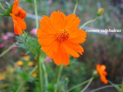 c0098807_20103281.jpg