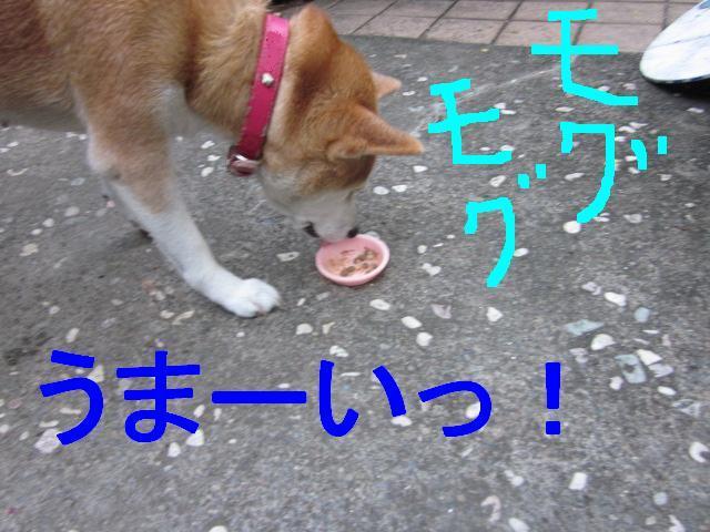 犬で実験_f0024310_2373159.jpg
