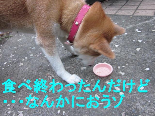 犬で実験_f0024310_2385984.jpg
