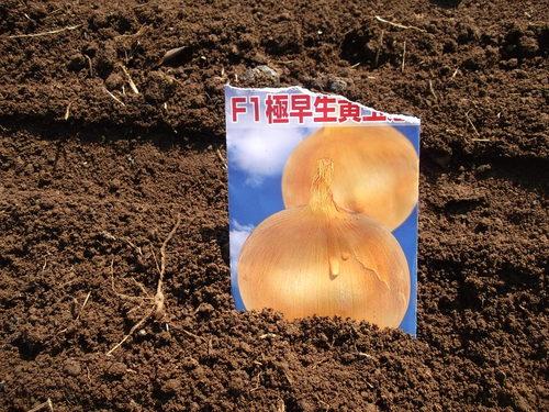秋冬野菜の種蒔き...玉ねぎ、大根_b0137932_15175293.jpg