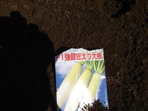 秋冬野菜の種蒔き...玉ねぎ、大根_b0137932_151968.jpg
