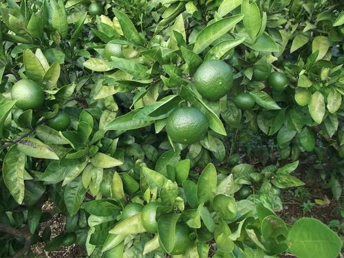 秋冬野菜の種蒔き...小松菜他_b0137932_15573692.jpg