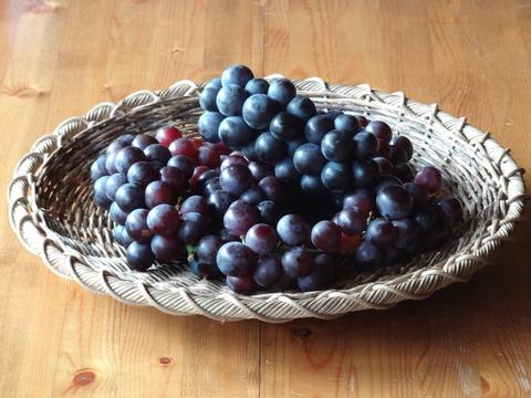 秋の収穫_a0233551_14491349.jpg