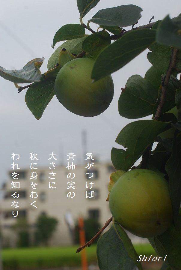 柿_c0187781_1746111.jpg