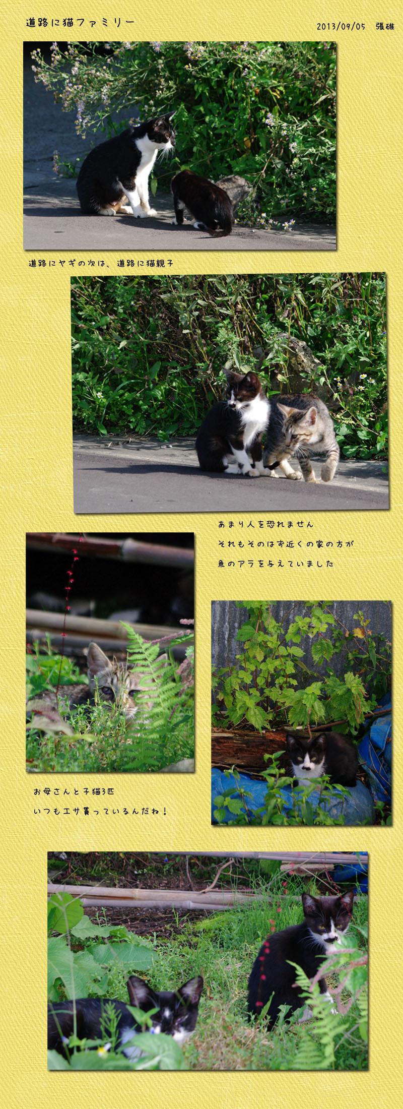 ヤギの次は幸せな野良猫ファミリー_b0019313_18205063.jpg