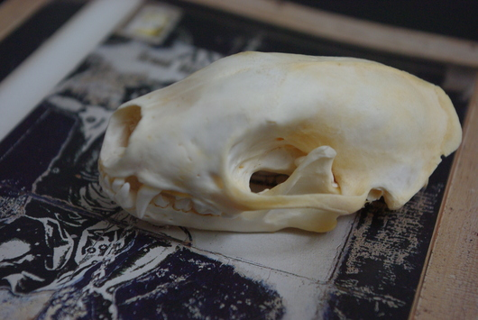 アナグマの頭骨_f0280238_15405260.jpg