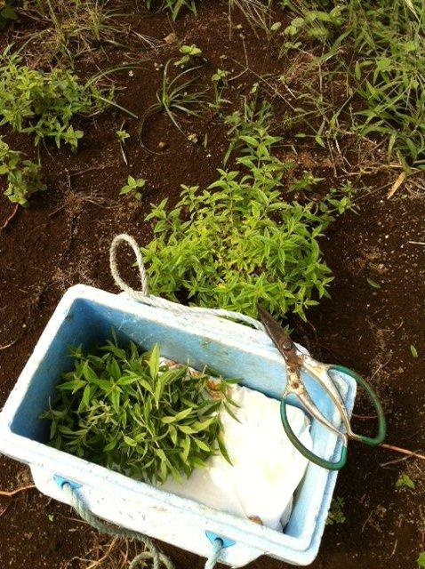堆肥運びの日・・飯田他2名でしたが 急遽1人で作業に_c0222448_1520537.jpg